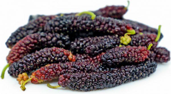 Pakistan Long Mulberry