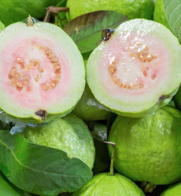 Peruvian White Guava Tree